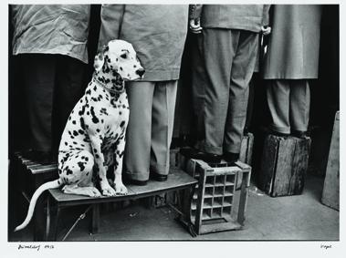 Walter Vogel, Cane dalmata Düsseldorf, 1956 © Walter Vogel